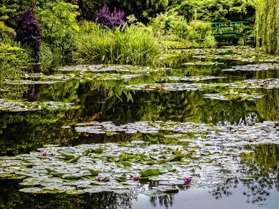 bassin des nymphéas à la manière de Monet